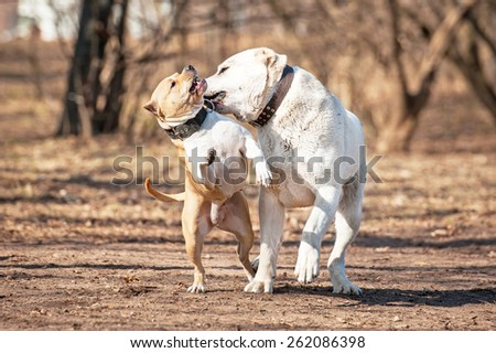 Two dogs playing in the park - stock photo