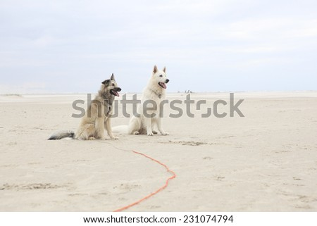 Two dogs playing on the sandy beach with a ball - stock photo