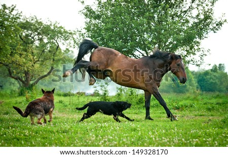 Two dogs playing with horse in summer  - stock photo