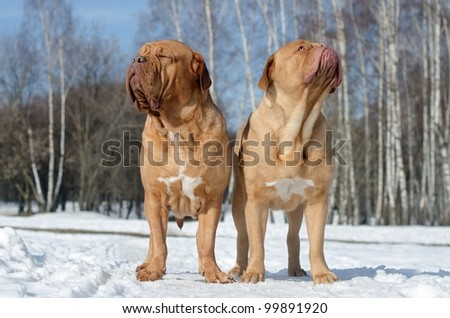 Two dogs relaxing under first spring rays of sun against snow background - stock photo