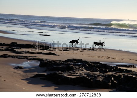 two dogs running along beach, queensland, australia - stock photo