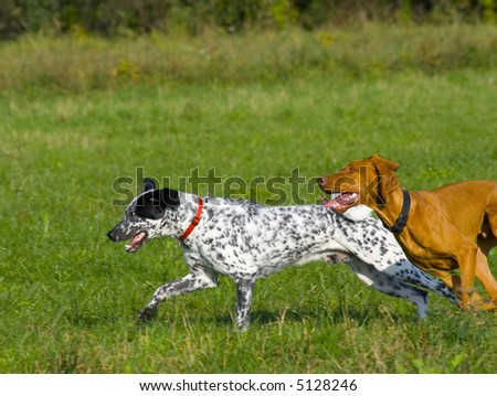 Two dogs running in grassy area.