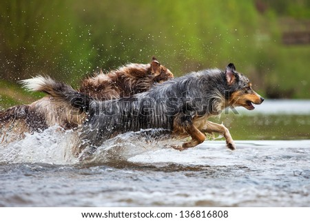 two dogs running in the water of a river