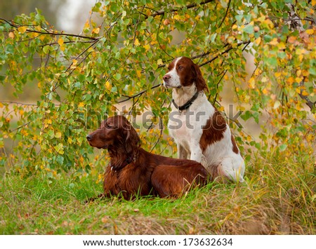 Two dogs sits on  green and yellow tree. - stock photo