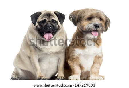 Two dogs sitting and panting, isolated on white - stock photo