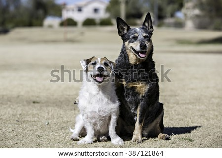 Two dogs sitting together  - stock photo