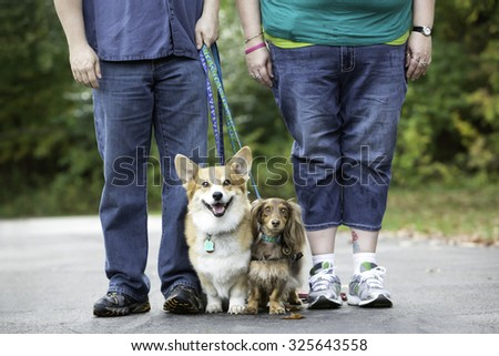 Two dogs standing with a man and woman legs - stock photo