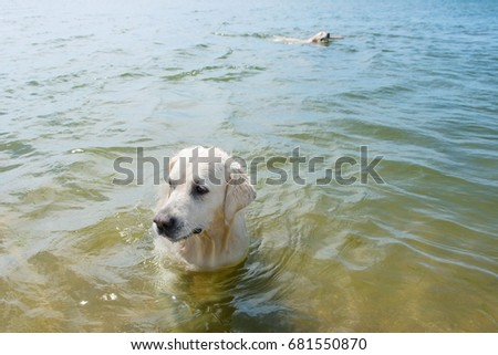 two dogs swimming near the beach in the ocean.