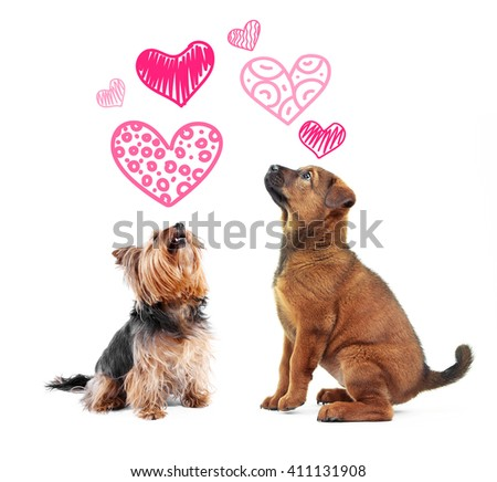 Two dogs together, isolated on white - stock photo