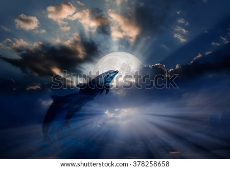 Two dolphins floating at ocean in moonlight