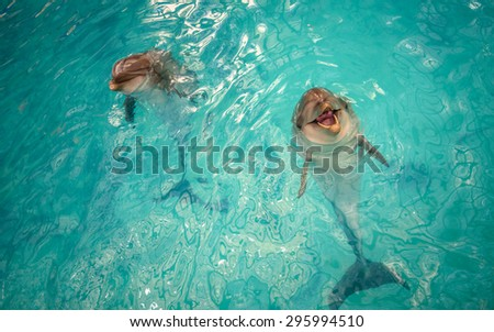 Two dolphins happily playing in the pool with seawater - stock photo