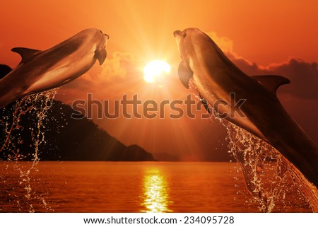 Two dolphins jumping from sea - stock photo
