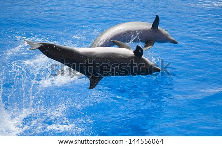 Two dolphins performing a show