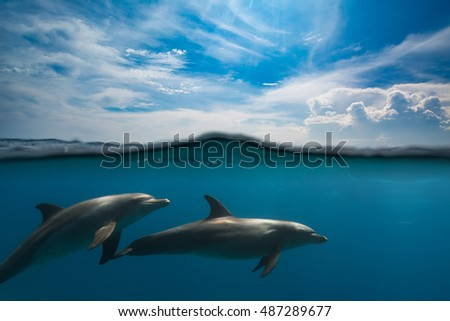 Two dolphins swimming underwater with waterline that splits clouds on the sky