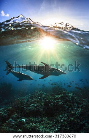 Two dolphins underwater a family mother with her child and breaking splashing wave above in sunlight - stock photo