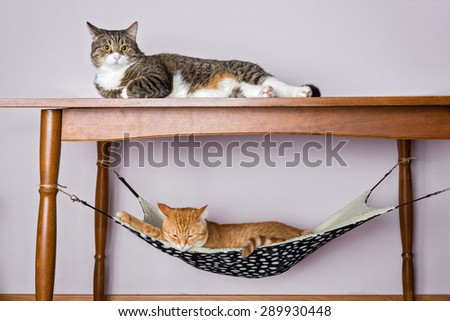 Two domestic cat sleeping, one under the table in the second hammock upstairs.