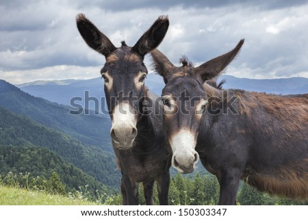 Two donkeys in the mountains