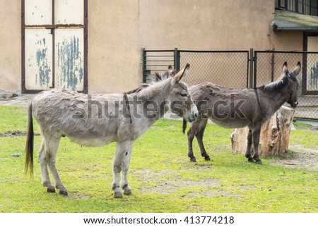 Two donkeys standing on green grass next to tree trunk - stock photo