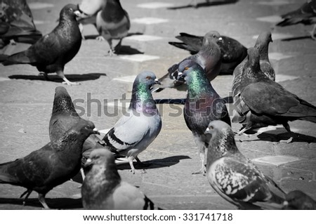 Two Doves at Street Over Other Birds - stock photo
