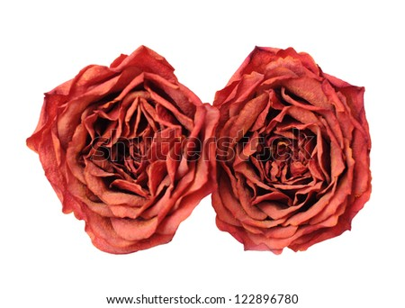 two dried rose isolated on white background - stock photo