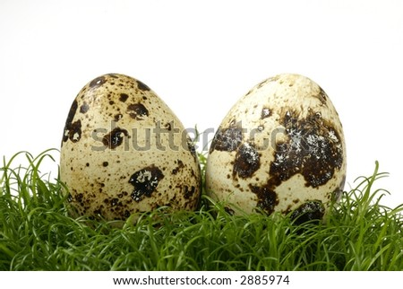 Two eggs on grass
