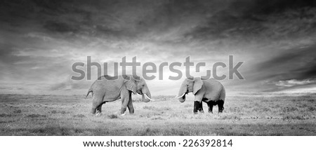 Two Elephant in the wild - national park Kenya - stock photo