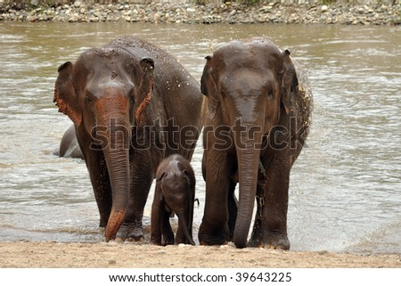 Two Elephant with baby - stock photo