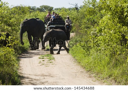Two elephants crossing dirt road with tourists in jeep in background - stock photo