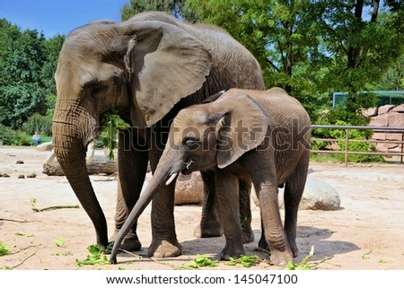 two elephants in a zoo - stock photo