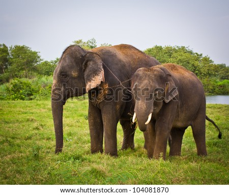 Two elephants in  thailand - stock photo
