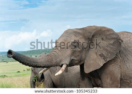 Two elephants, Kenya