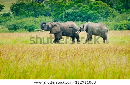 Two elephants, Kenya - stock photo