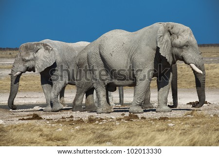 two elephants namibia