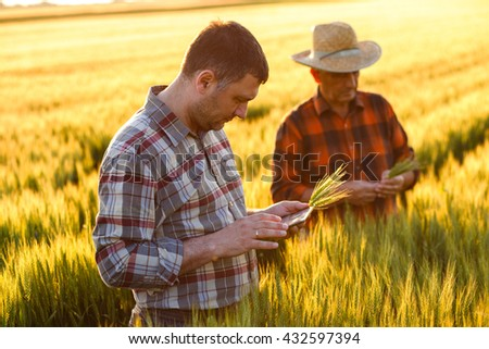 Two farmer standing in a wheat field and looking at tablet, They are examining corp at sunset. - stock photo