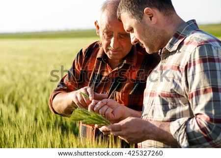 Two farmers in a field examining wheat crop.  - stock photo