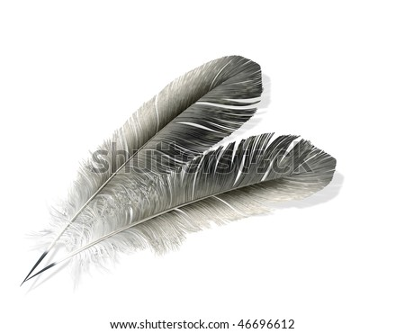 Two feathers isolated 3d model