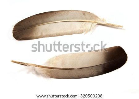 Two feathers isolated on white - stock photo