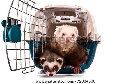 Two Ferrets in cage isolated on white - stock photo