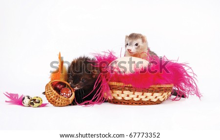 Two ferrets with a Easter eggs in a basket and rose feathers - stock photo