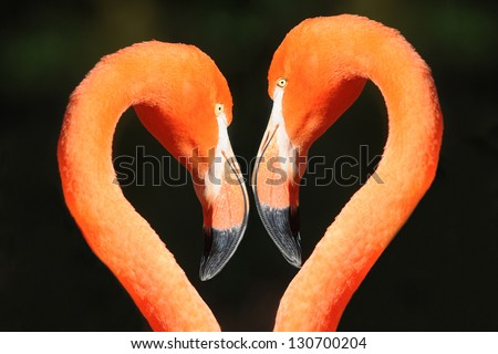 two flamingo heads - heart-shaped - stock photo