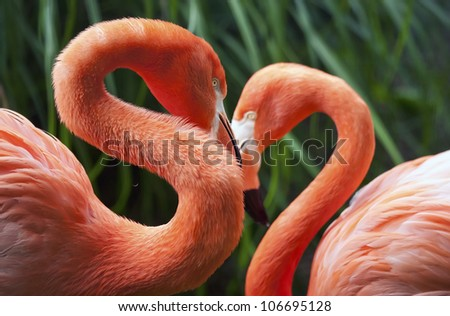 """Two flamingos posing in a """"heart"""" shape - stock photo"""