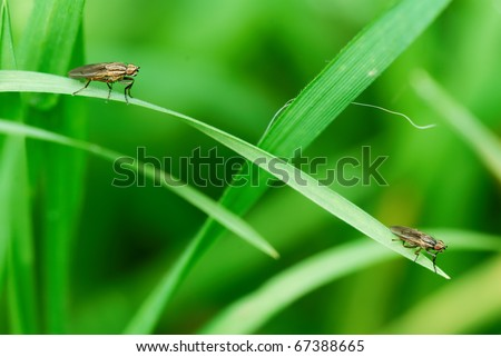 Two flies sitting on the single blade of grass