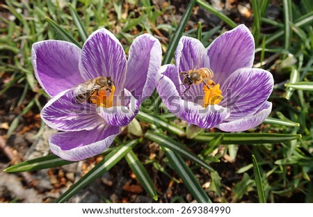 Two flowers ,two bees  - stock photo