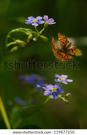 Two flying  butterflies and flowers - stock photo
