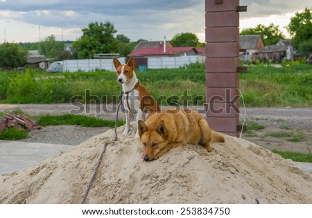 Two four-legged friends having some evening rest on sand heap - stock photo