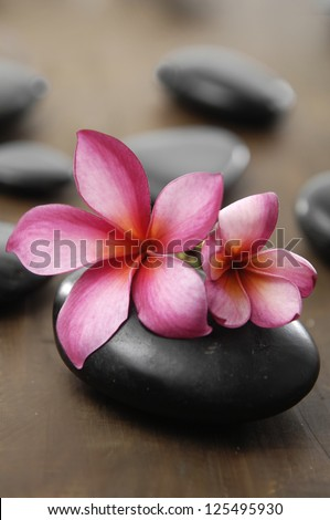 Two frangipani and stones for spa - stock photo