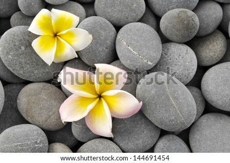 Two frangipani flower and gray stones background