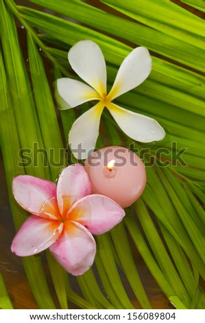 Two frangipani flowers and pink candle and palm leaf texture - stock photo