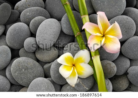 Two frangipani with bamboo grove on pebbles texture - stock photo