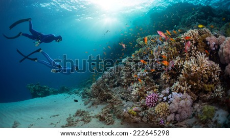 Two free divers exploring coral reef wall with vivid marine life in the Red Sea. Egypt - stock photo